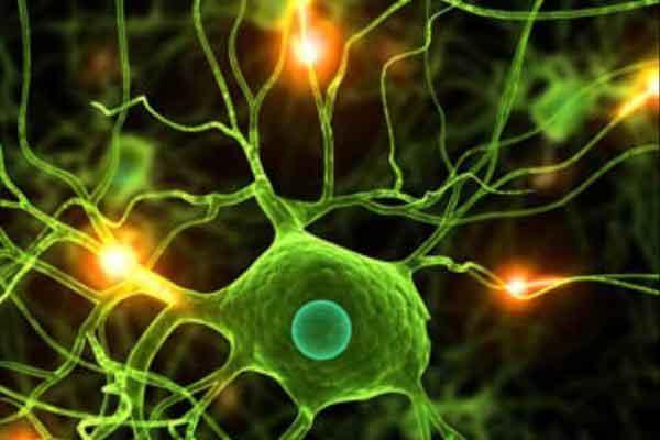 پایان نامه رشته زیست شناسی سلولی و ملکولی