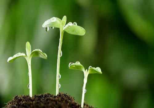 پایان نامه رشته زیست شناسی گیاهی