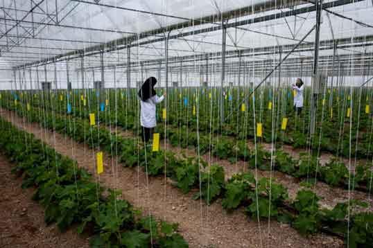 پایان نامه مهندسی کشاورزی